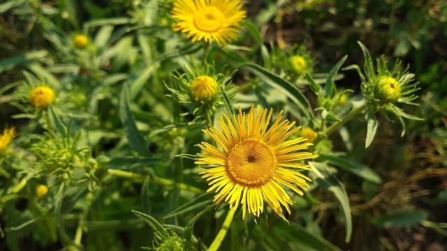 Devâsíl bright colors yellow flowers.