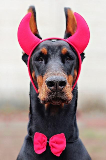 Devil doberman dog, animals.