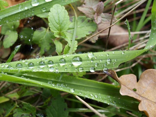 Dew grass drops, nature landscapes.