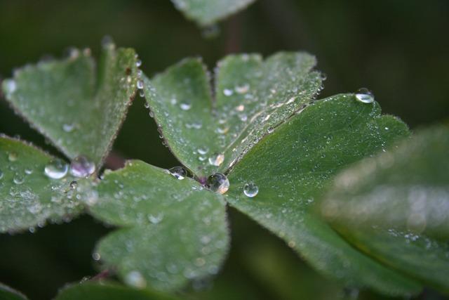 Dewdrop leaf plant, nature landscapes.
