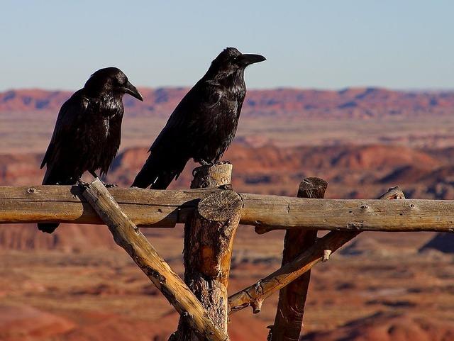 Dig birds fence, nature landscapes.