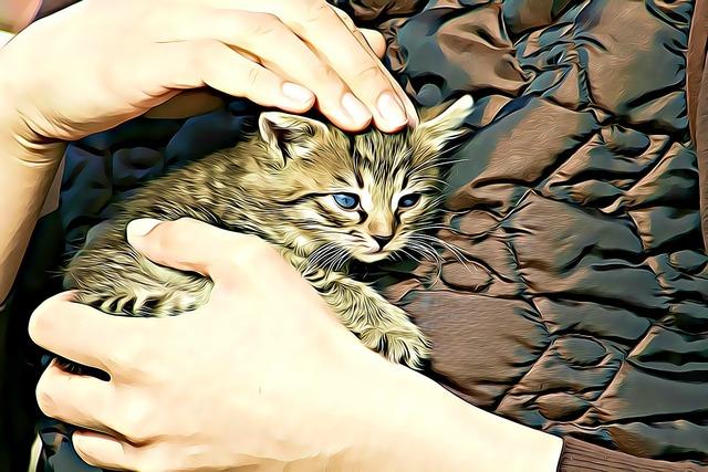 Digital graphics kitten, animals.
