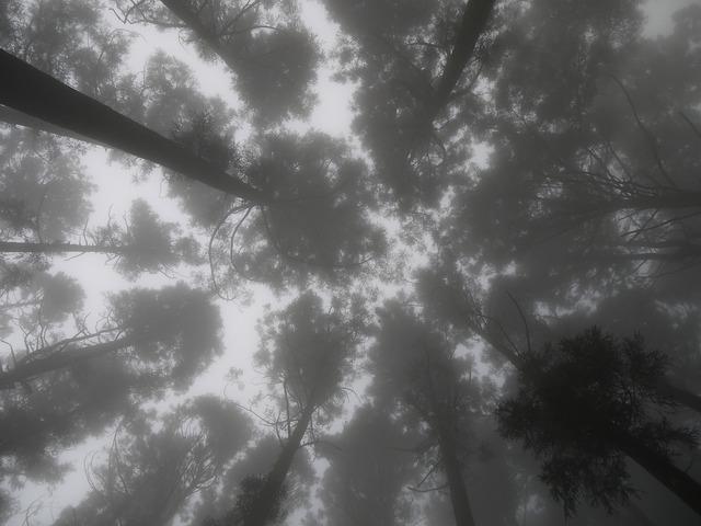 Dim 朧 beauty mountains woodland.