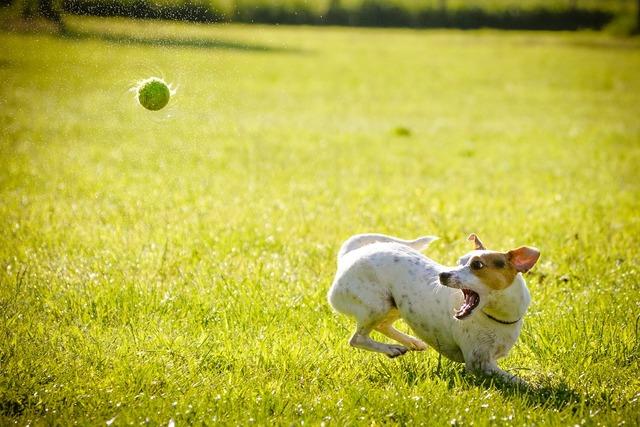 Dog action hunt, animals.