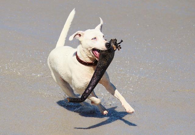 Dog action play, animals.