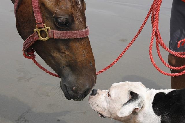Dog and horse animals looks, animals.