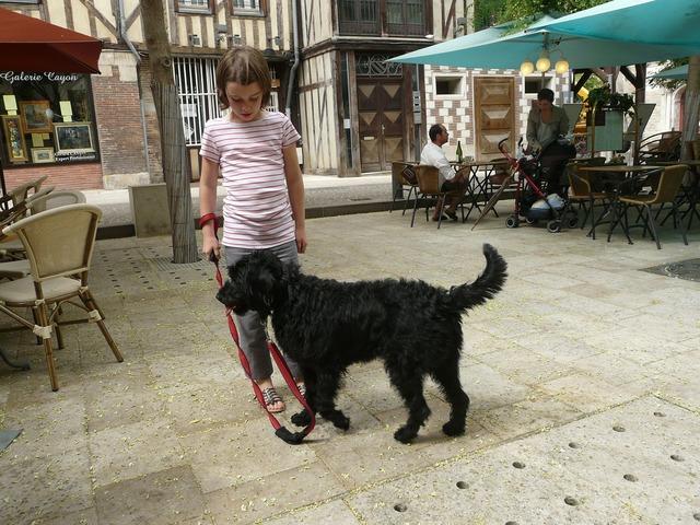 Dog animal pet, animals.