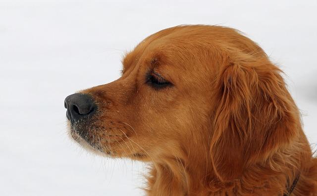 Dog animals pets, animals.