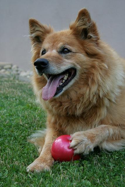 Dog ball playful, animals.