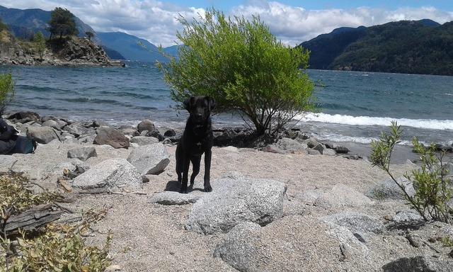 Dog beach lake, animals.