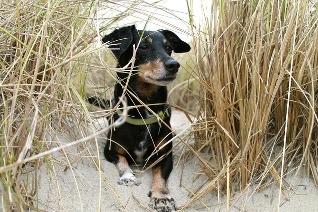 Dog beach sand, animals.