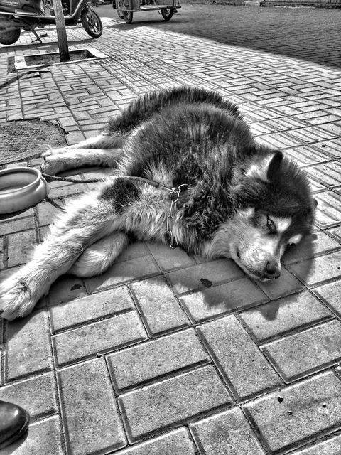 Dog black and white eyes, animals.