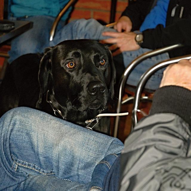 Dog black view, animals.