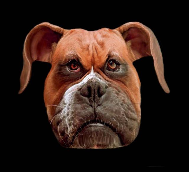 Dog boxer animal, animals.