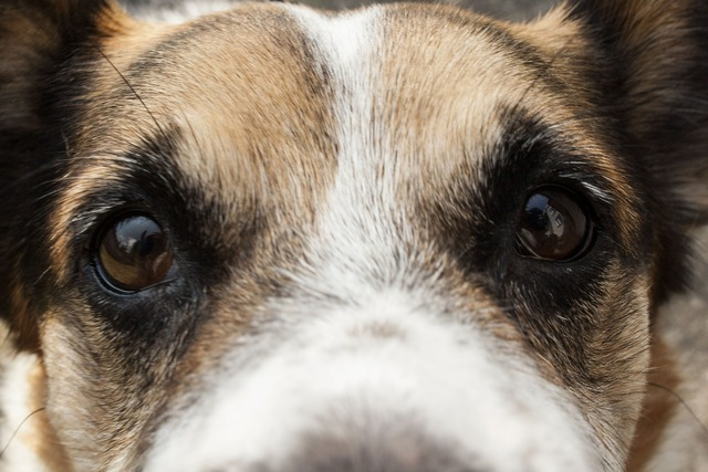 Dog bronze eyes, animals.