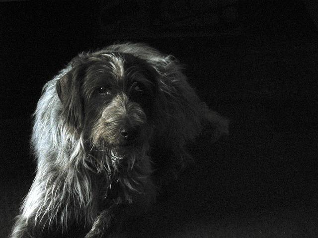 Dog brown portrait, animals.