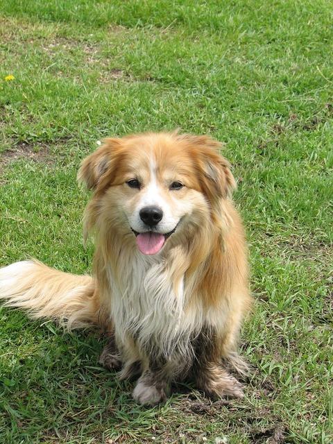 Dog canine farm, animals.