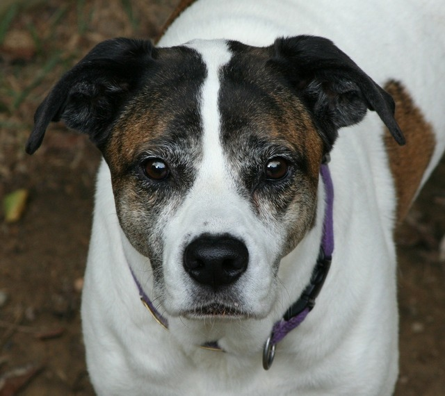Dog canine pet, animals.