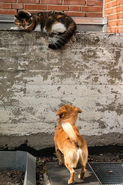 Dog cat growl, animals.