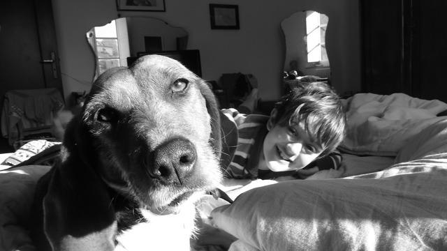 Dog child friendship, animals.