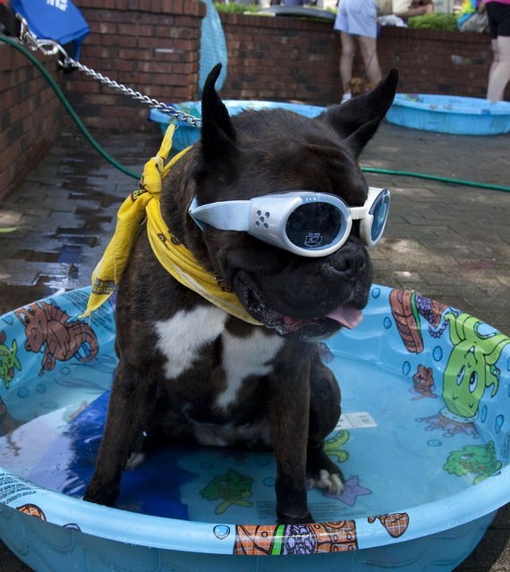 Dog clothes goggles, animals.
