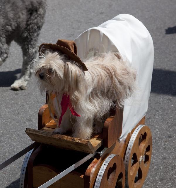 Dog costume parade, animals.