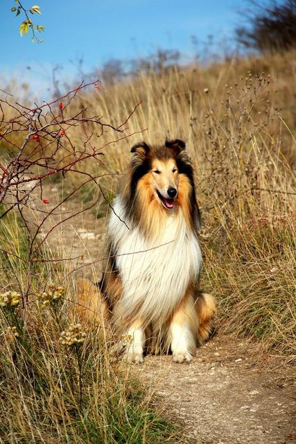 Dog countryside trail, animals.