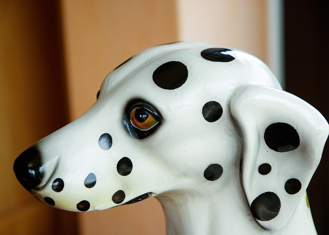 Dog dalmatian snout, animals.
