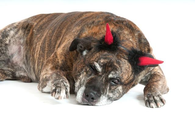Dog devil dogs, animals.