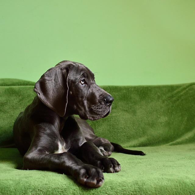Dog dog breed large, animals.