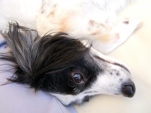 Dog dog face close, animals.