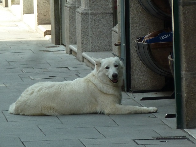 Dog dog lying street, animals.