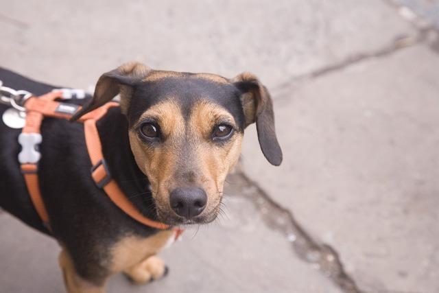 Dog dog on a lead puppy, animals.