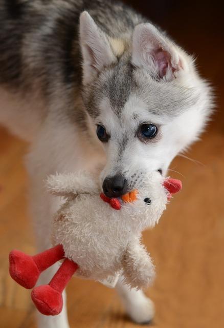 Dog dog toy toy, animals.