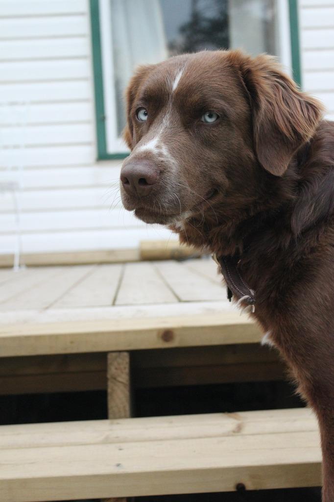 Dog doggy pup, animals.