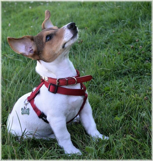 Dog dogs pet, animals.