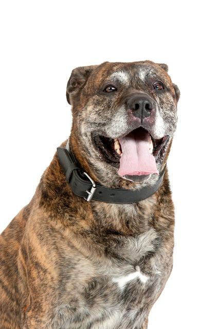 Dog dogs portrait, animals.