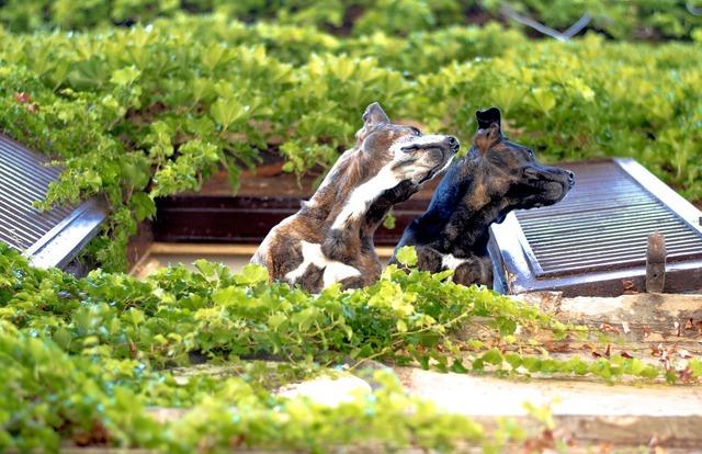 Dog dogs window, animals.