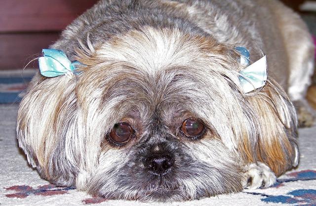 Dog domestic puppy, animals.