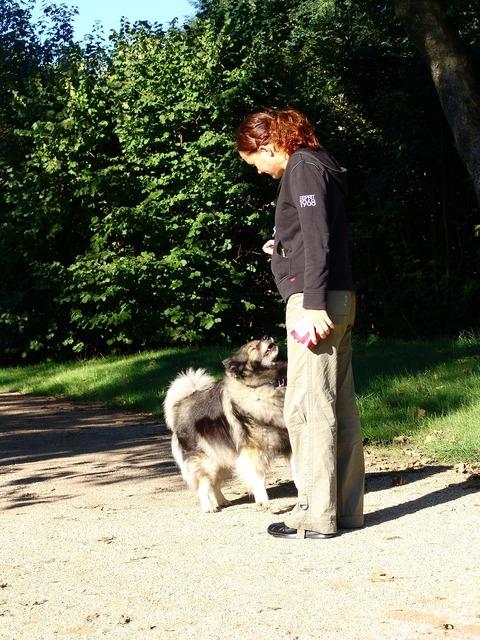 Dog educate education, animals.