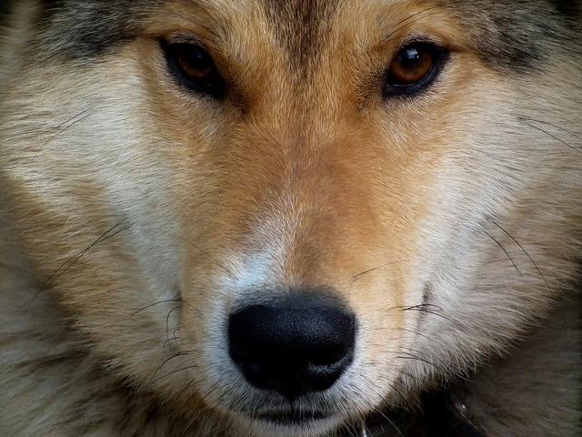 Dog eyes person, animals.
