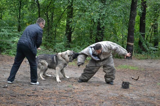 Dog fight fighting dog attack dog, animals.