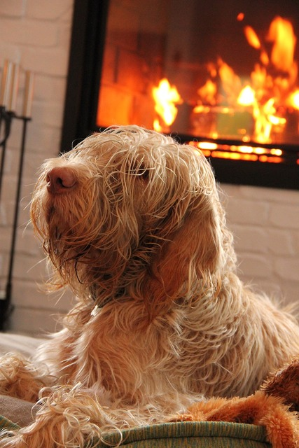 Dog fire home, animals.