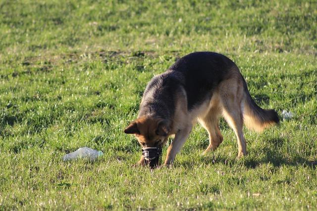 Dog fun search, animals.