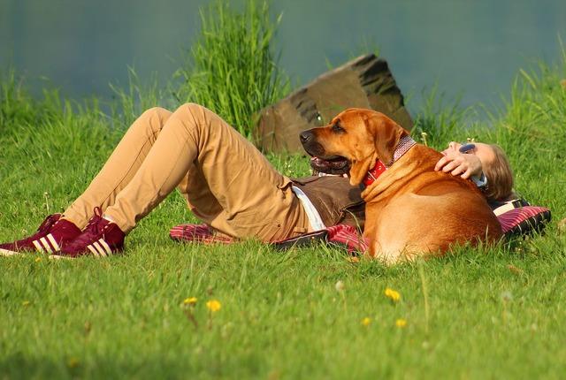 Dog girl summer, animals.