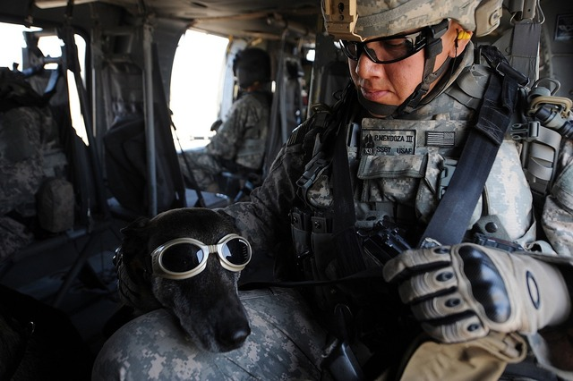 Dog goggles military, animals.