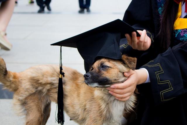 Dog graduation photo bachelor gown, animals.