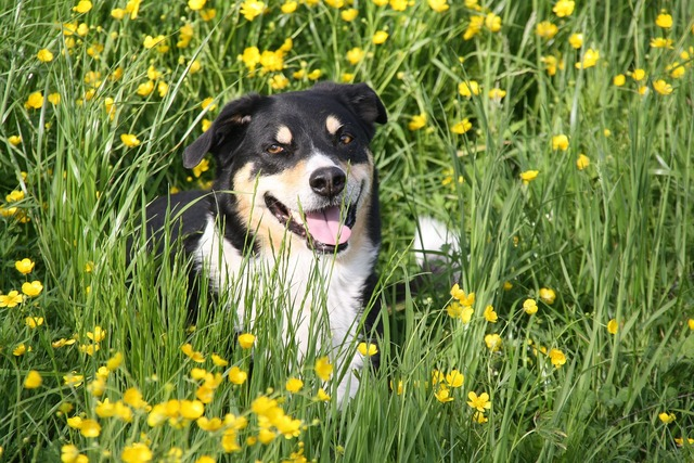 Dog grass beautiful, animals.