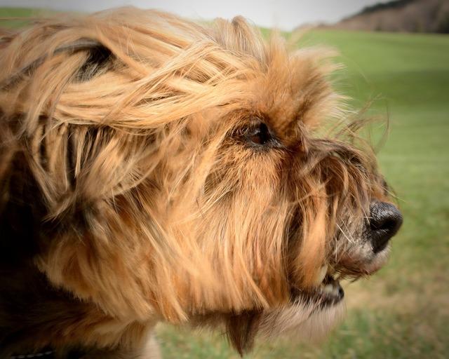 Dog head portrait, animals.