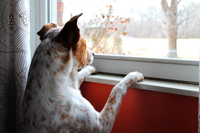 Dog intent watching, animals.